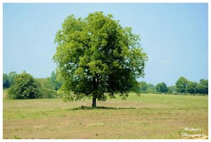 The Shade Tree by TheMan268