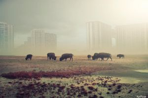 Animals Land by noro8