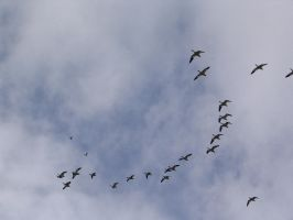 Migrating. by Regenstock