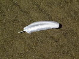 Feather 2 -- Sept 2009 by pricecw-stock