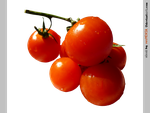 red...tomatoes - STOCK by resMENSA