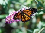 Butterfly From Summer by DaFotoGuy