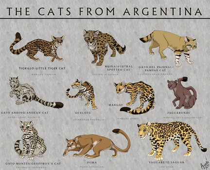 Cats from Argentina by Nothofagus-obliqua