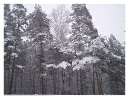 Snow And Trees 2 by Ketrilla