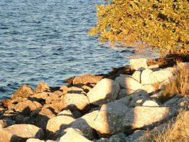 Tree Near the Waters by kome