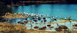 Flamingo Island by BennyBrand