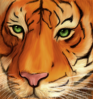 Tiger by tite-pao