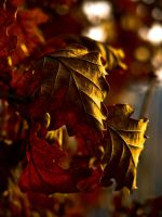 Autumns golden leaves by ervin21