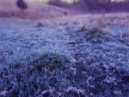 Frosty Pasture 7 by GoblinStock