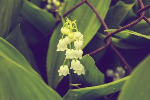 lily of the valley and fence by Artursphoto