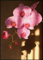 Orchid by pinkal09