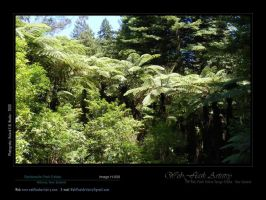 Redwoods Park Estate H008 by aktell