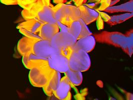 ligthed flower by harlan-heuker