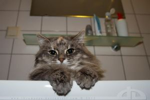 BathroomCat is watching you.... by thrumyeye