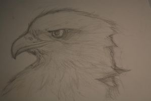 Eagle Sketch by Rustyscout