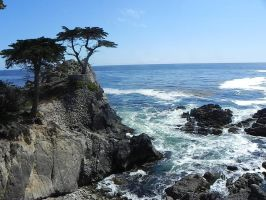 Not So Lone Cypress by ron-brouillette