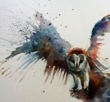 Barn owl in flight watercolour by sarahstokes