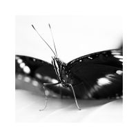 Butterfly by Cameron-Jung