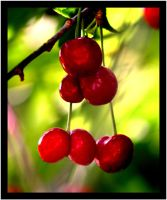 Cherries by uk-antalya