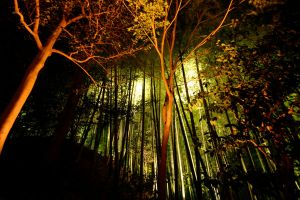 Light Forest by Thrill-Seeker