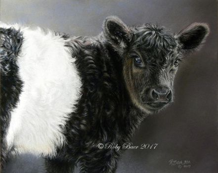 BELTED GALLOWAY CALF 8X10 PASTEL BY ROBY BAER PSA by robybaer