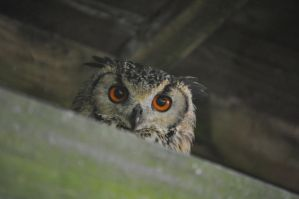 """""""I'm watching you"""" by rayrussell2000uk"""