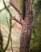 Peck for peanuts by bexa