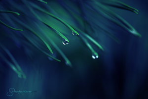 Moonlight Droplets II by MaaykeKlaver