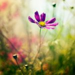 out of focus by frayart