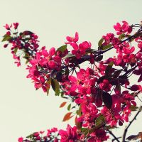 Spring Obsession by h23b