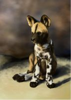 Painted Dog Pup by foxluver1