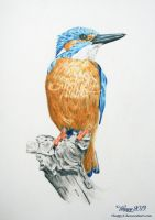 Kingfisher by 5Happy5