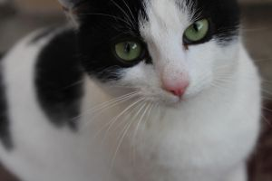 Cat with green eyes. by Petuui
