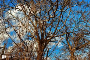 Trees by andreiciungan
