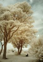 The Park Infrared by Dave-Ellis