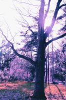 Trees in the sun by absinthalicious