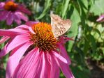Butterfly on a Flower by googly-googly2