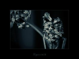 Hyacinth II by Athines