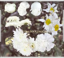 white flowers 2 PNG  by starscoldnight by StarsColdNight