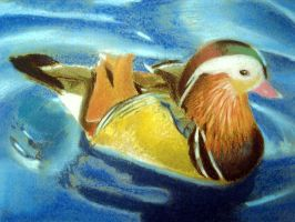 Mandarin Duck by MeowImaCow