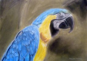 Macaw Pastel Painting by masaad