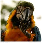 Tasty Walnut by In-the-picture
