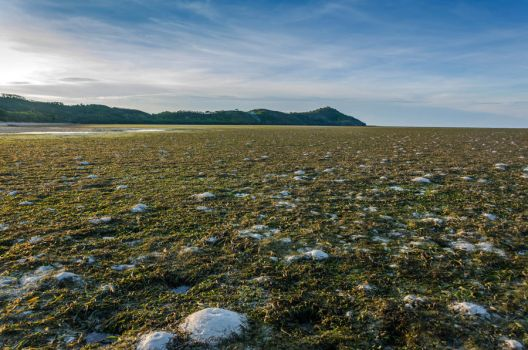 Tidal Flats by TheMetronomad