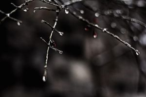 Ice Wood and Leaves by LaurentGiguere