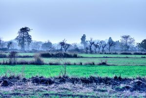 Across The Fields - Rework HDR by InayatShah