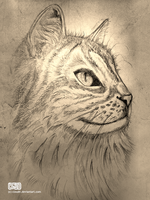 Cat sketch by CloudN