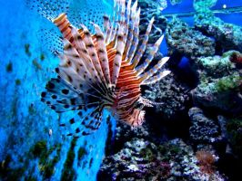 Under the water 2. by Bubel-Coyot