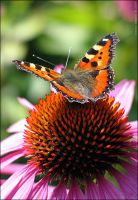 Yoga for the Butterfly (color) by Frider