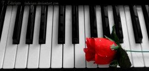 Petals of Notes by tedwiges