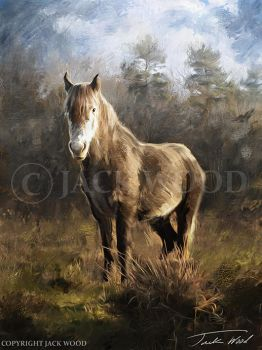 Grey Horse by Jack-Wood